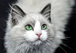 Lemmikille.com   Koira- ja kissa-aiheiset artikkelit